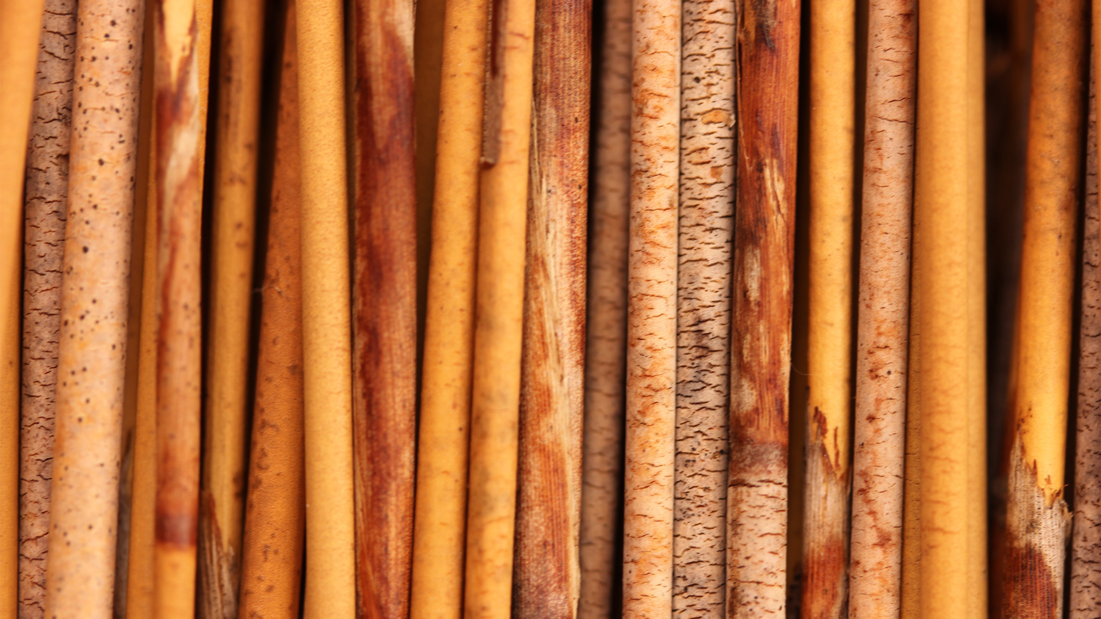 bamboo_texture_tree_background_94997_3840x2160